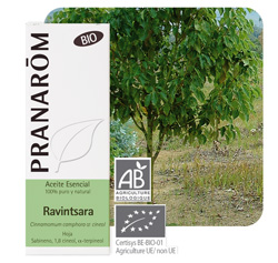 Blog-P-Ravintsara BIO