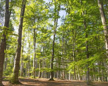 forêt-verte-de-nature-de-l-oxygène-forêt-aménagée-en-parc-naturelle-complètement-avec-91928471[1]