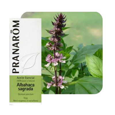 Aceite esencial de albahaca sagrada 5 ml.