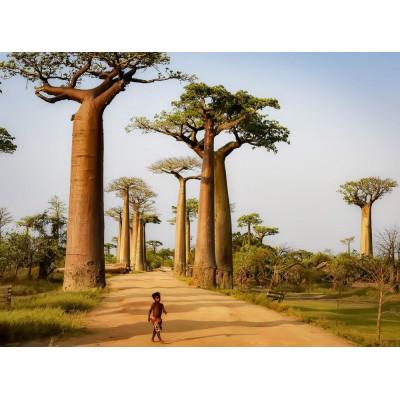 Webinar: Los aceites esenciales de Madagascar (24/2/2021)